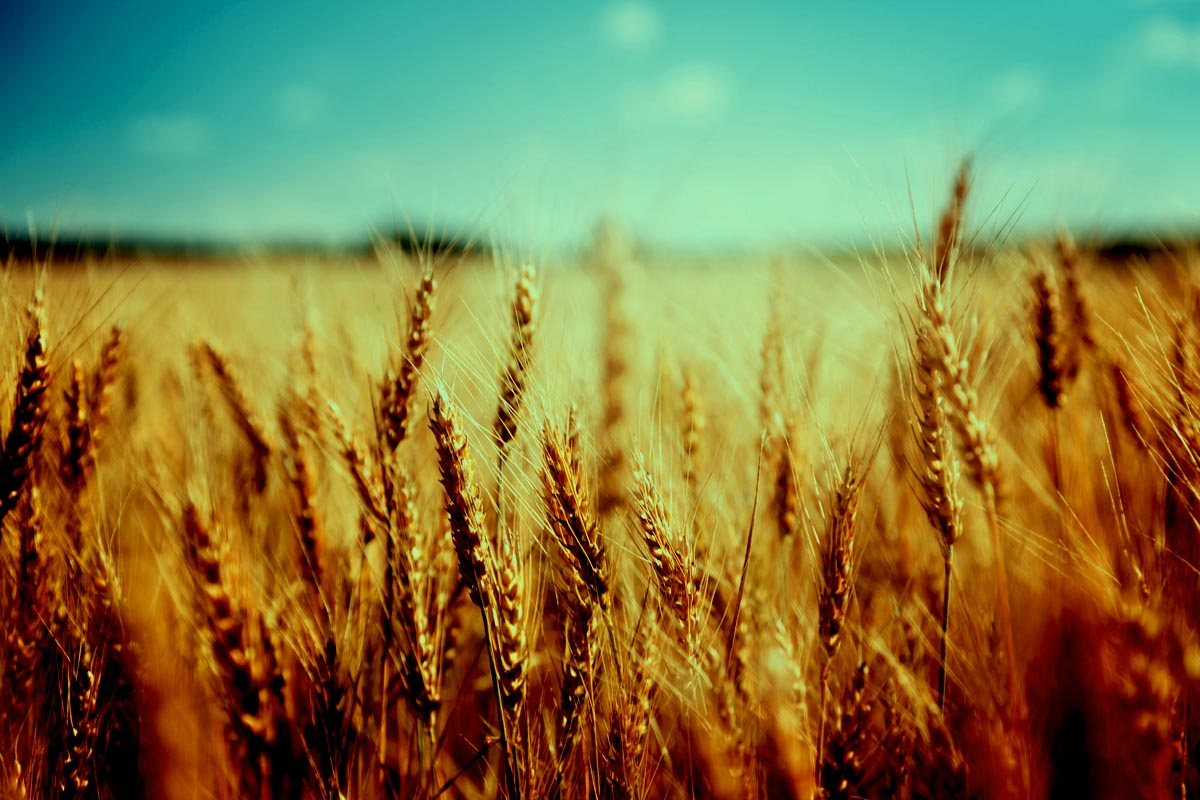 How to cultivate a harvest of righteousness